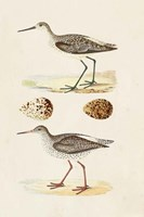 Sandpipers & Eggs II Framed Print