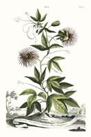 Munting Garden Varieties II Fine Art Print