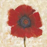 Red Poppy Portrait II Fine Art Print