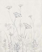 Neutral Queen Anne's Lace I Fine Art Print