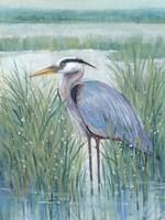 Wetland Heron II Fine Art Print