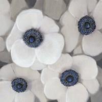 White Anemone II Framed Print