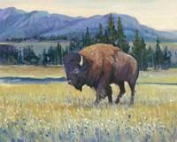 Animals of the West II Fine Art Print