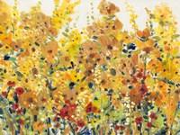 Golden Summer Garden I Framed Print