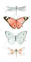 Summer Butterflies I Framed Print