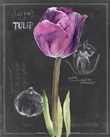 Chalkboard Flower IV Fine Art Print