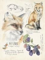 Wildlife Journals III Fine Art Print
