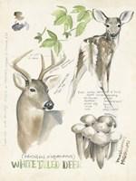 Wildlife Journals IV Framed Print