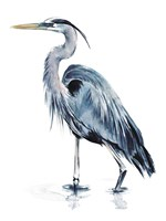 Blue Blue Heron II Fine Art Print
