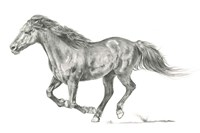 Wild Horse Portrait I Fine Art Print