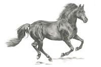 Wild Horse Portrait II Fine Art Print