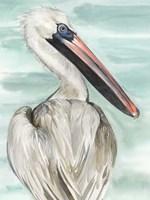 Turquoise Pelican I Fine Art Print