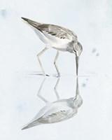 Sandpiper Reflections I Fine Art Print