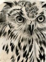 Charcoal Owl I Framed Print