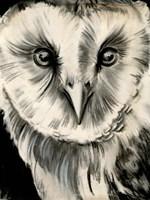 Charcoal Owl II Framed Print