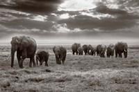 Amboseli elephants Fine Art Print