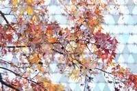Autumn Leaves 2 Fine Art Print