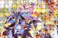 Autumn Leaves 4 Fine Art Print