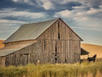 Farm & Field VI Fine Art Print