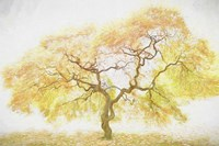 Golden Tree Fine Art Print