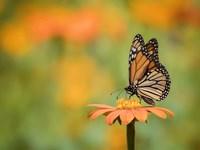 Butterfly Portrait IX Fine Art Print