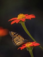 Butterfly Portrait X Fine Art Print
