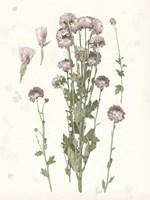Pressed Blooms I Fine Art Print
