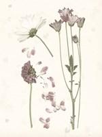Pressed Blooms II Fine Art Print