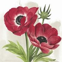 Crimson Anemones I Framed Print