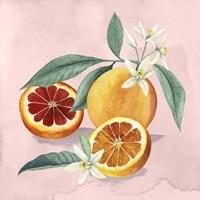 Orange Blossom II Framed Print