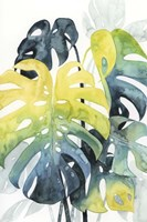 Sunset Palm Composition I Fine Art Print