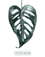 Gemstone Tropicale III Framed Print