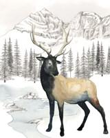 Winter Elk I Framed Print