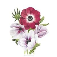 Anemone Blooms I Framed Print