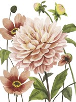 Dahlia Spell I Fine Art Print