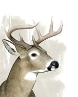 Timberland Friend I Framed Print