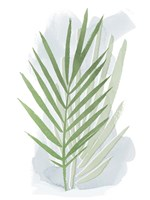 Palm Overlay I Framed Print