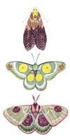 Moth Fairies I Framed Print