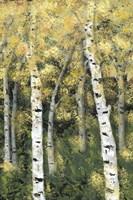 Birch Treeline III Framed Print