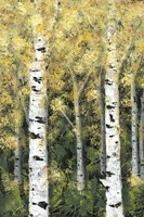 Birch Treeline I Framed Print