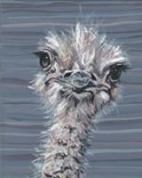 Animal Patterns V Fine Art Print