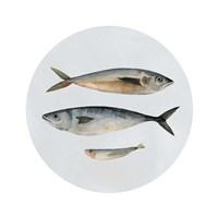 Three Fish I Fine Art Print