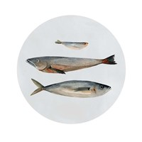Three Fish II Fine Art Print