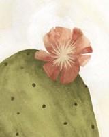Arid Bloom II Framed Print