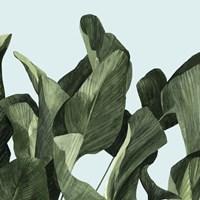Celadon Palms II Fine Art Print