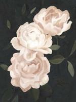 Nighttime Flora III Framed Print