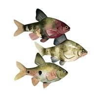 Rainbow Fish II Fine Art Print