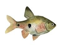 Rainbow Fish III Framed Print