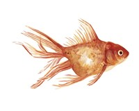 Ornamental Goldfish II Fine Art Print