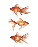 Ornamental Goldfish III Fine Art Print